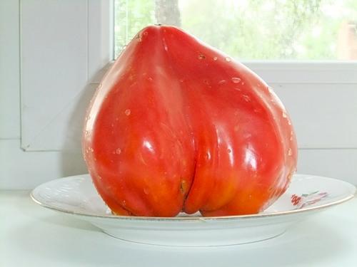 сорт помидоров бычье сердце фото