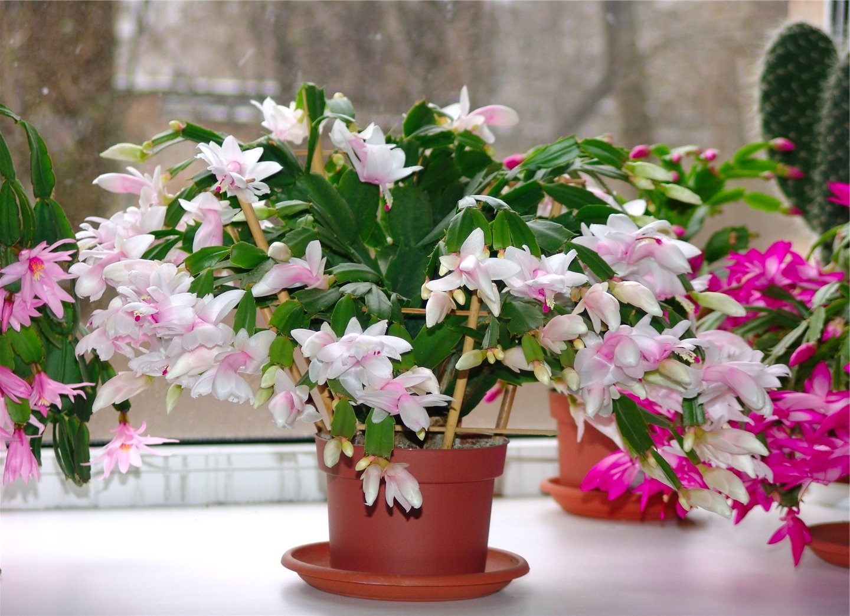 Как красиво вырастить комнатные цветы
