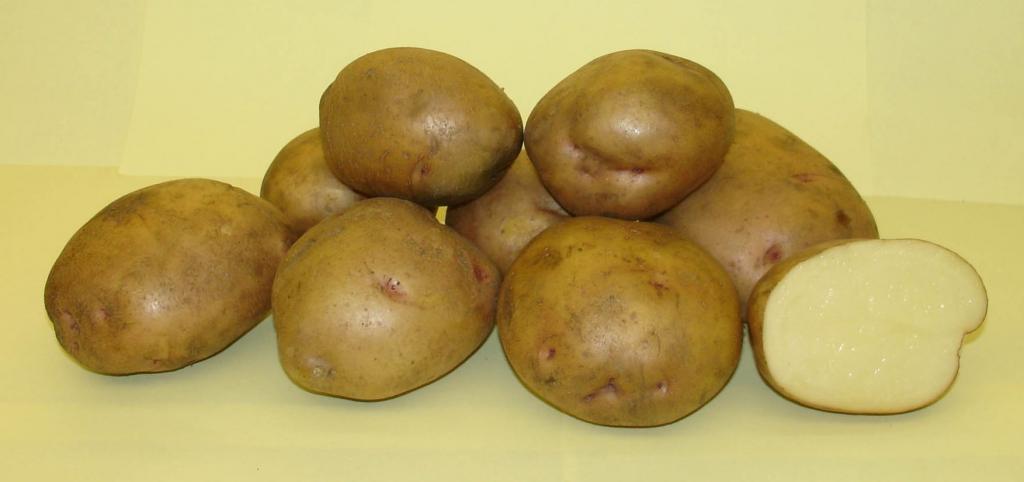 картофель фото жуковский
