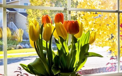 Глубина горшка для тюльпан
