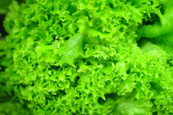 латук салат фото