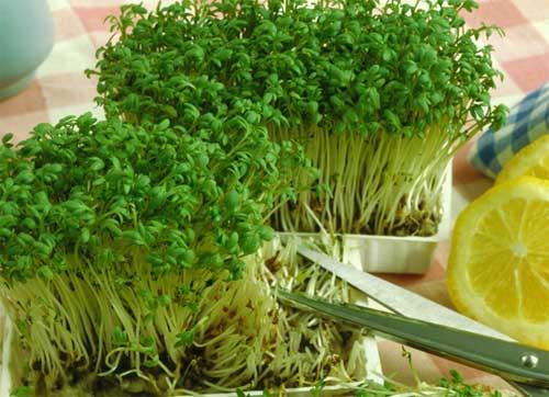 крест салат как употреблять в пищу рецепты