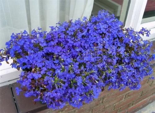 ампельные цветы фото: