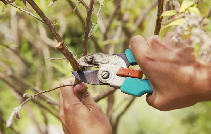 Обрезать дерево своими руками