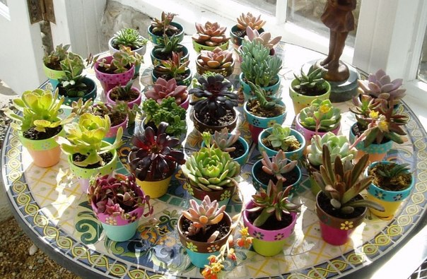 http://ogorodsadovod.com/sites/default/files/u79/2015/04/succulents2.jpg