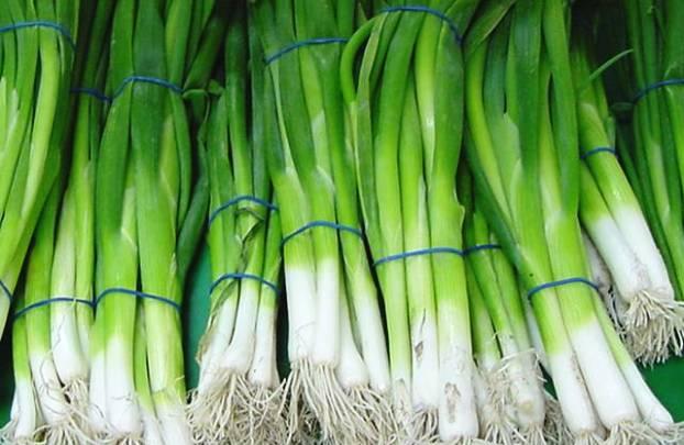 Лук на зелень в теплице: правила выращивания