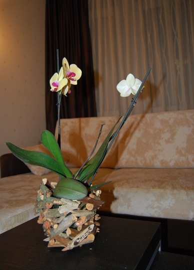 Как пересаживать цветущую орхидею в домашних условиях 428