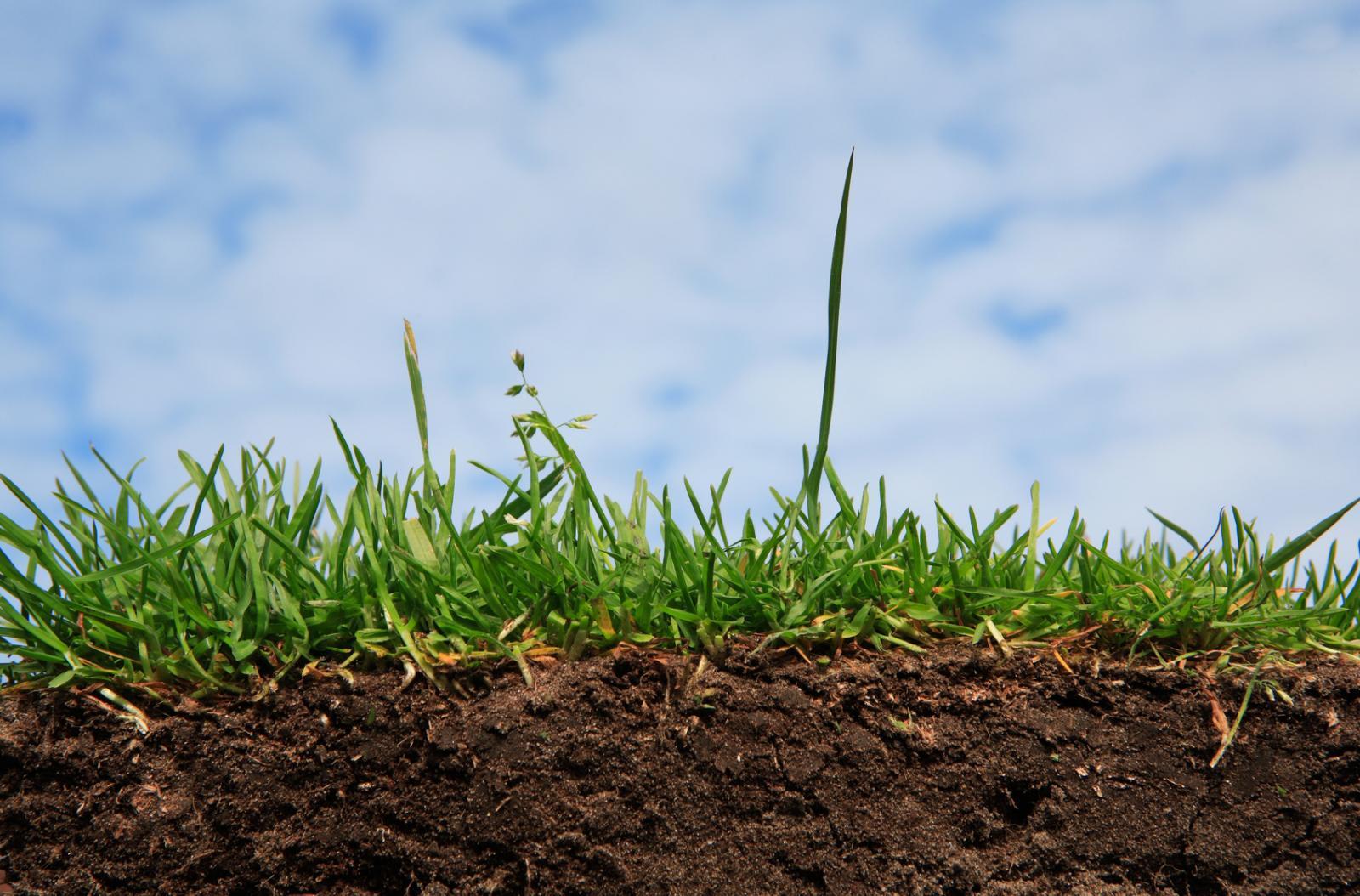203 гектари землі вже віддали у користування закарпатським військовим