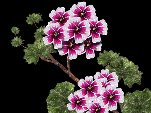 Цветы герань фото и картинки