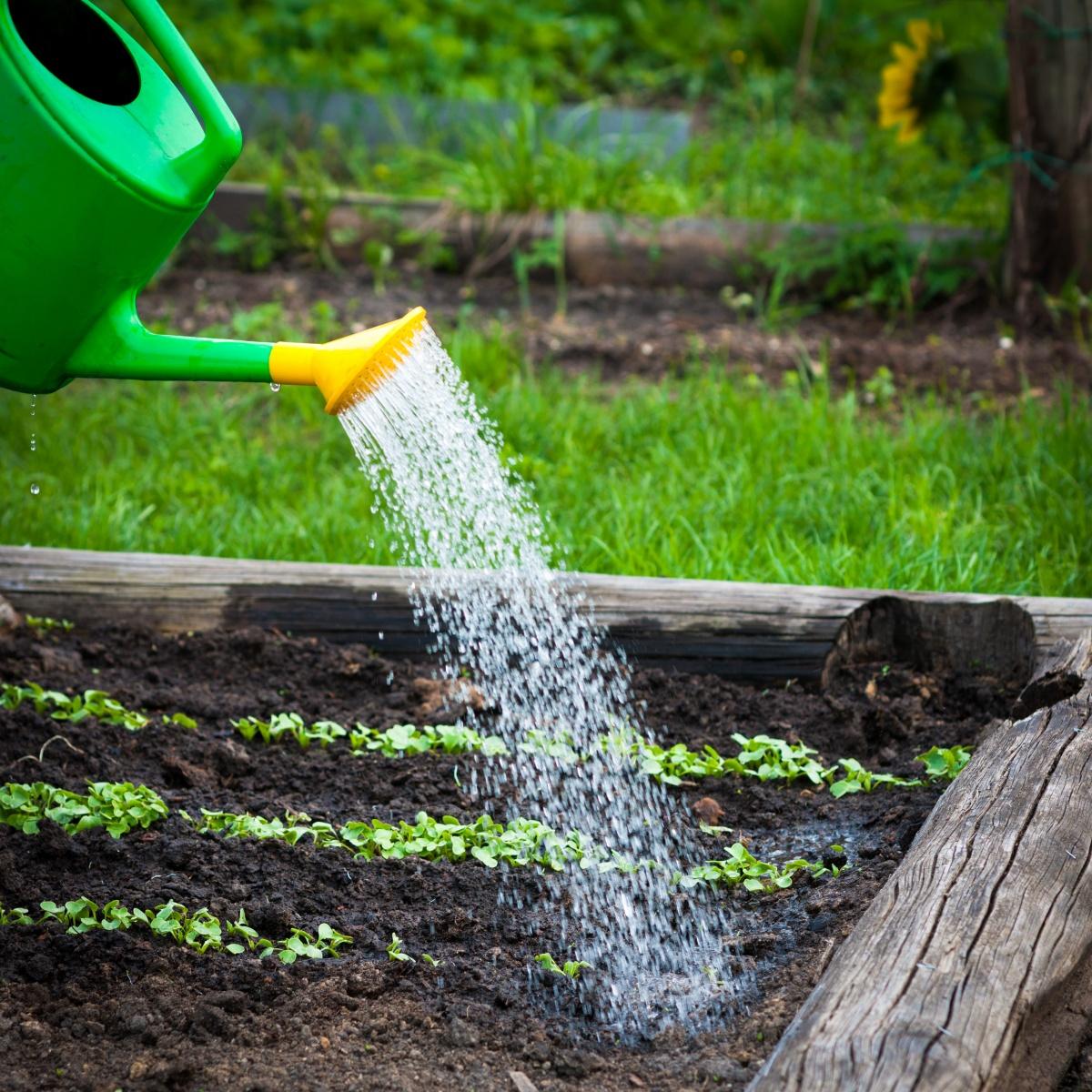 Как для полива жесткую воду сделать мягкой для