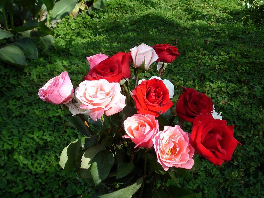 Как ухаживать за розами срезанными