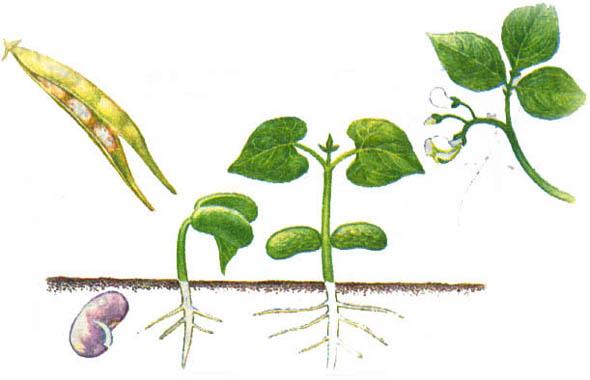Размножение цветов черенками фото