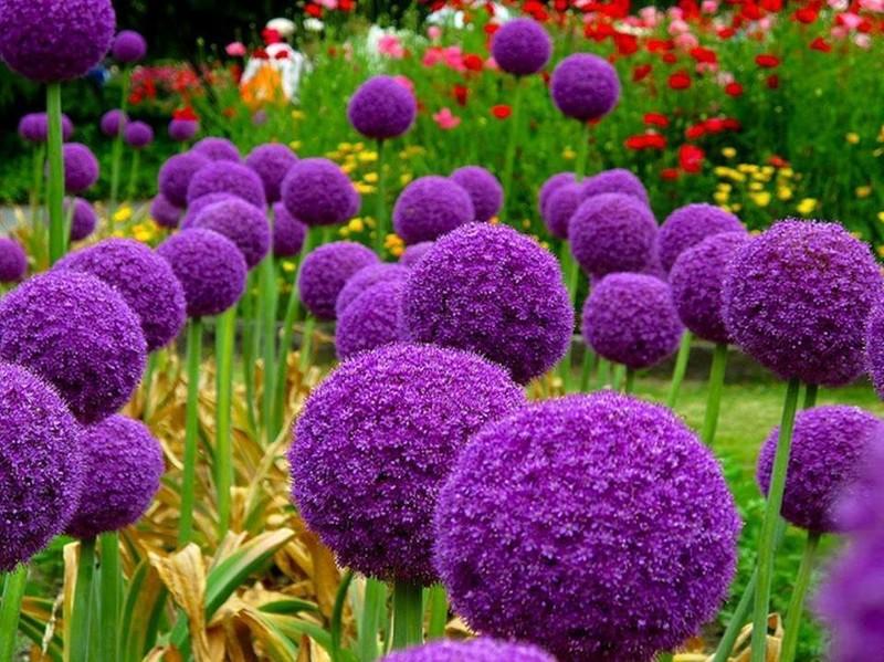 Цветы многолетние осенние