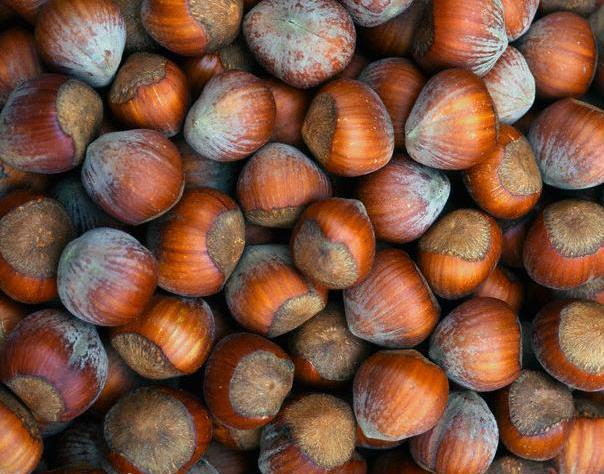 Саженцы ореха Орехоплодный питомник 57