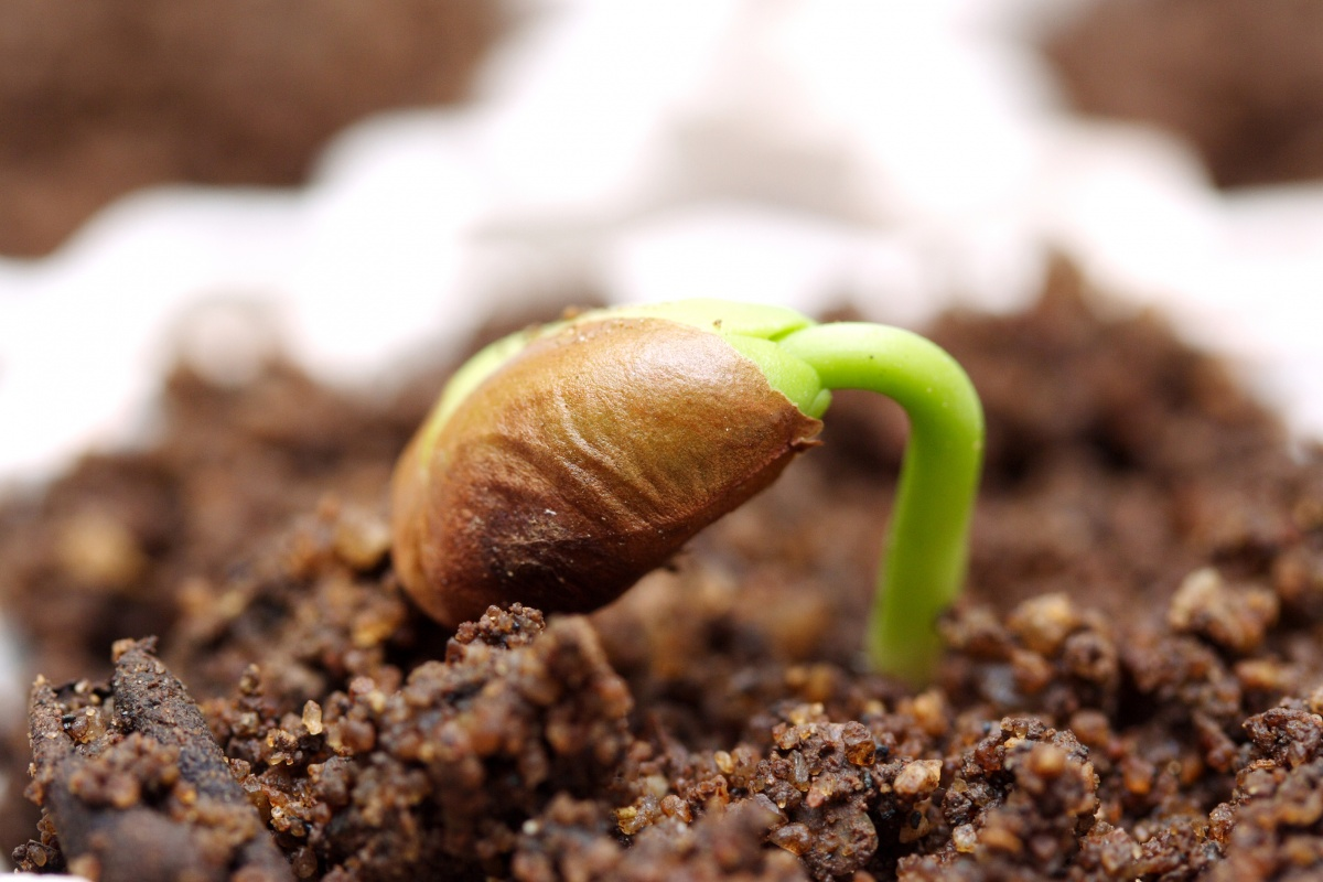 seed germinated