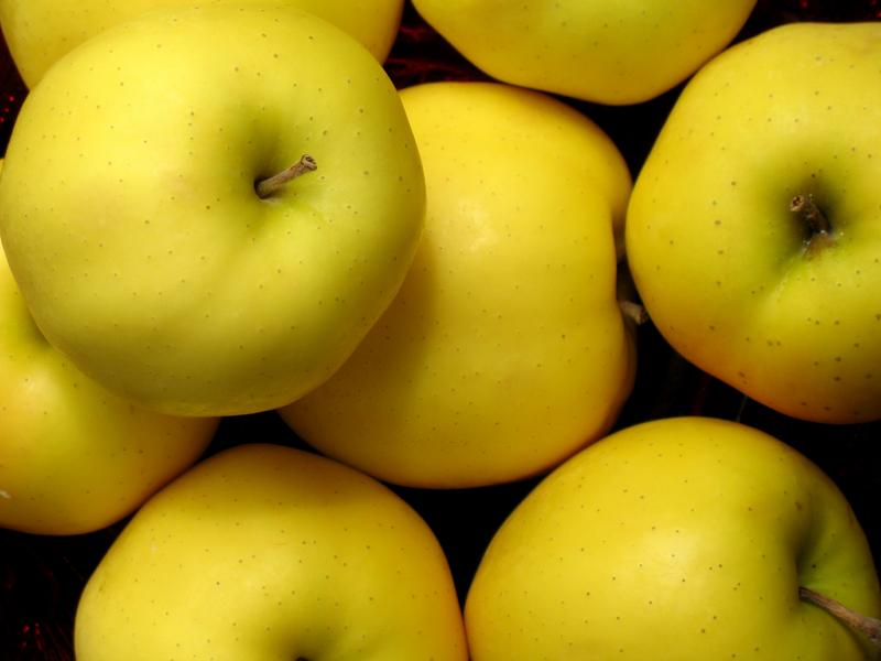 яблоня ранет золотой описание фото