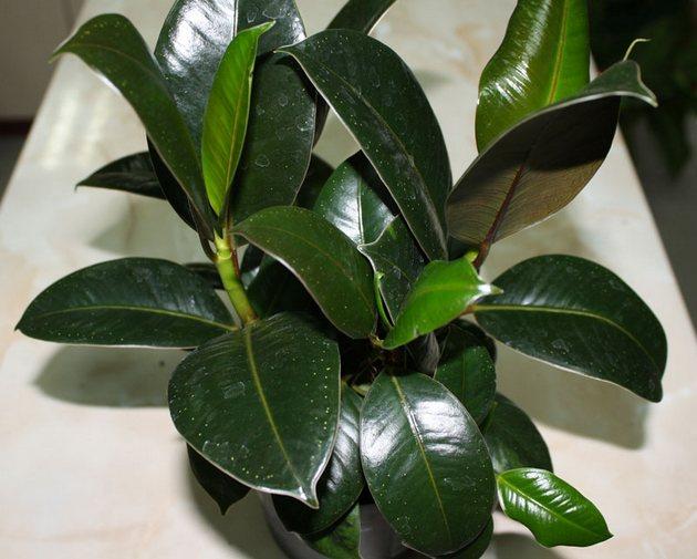Уход в домашних условиях за растениями 90