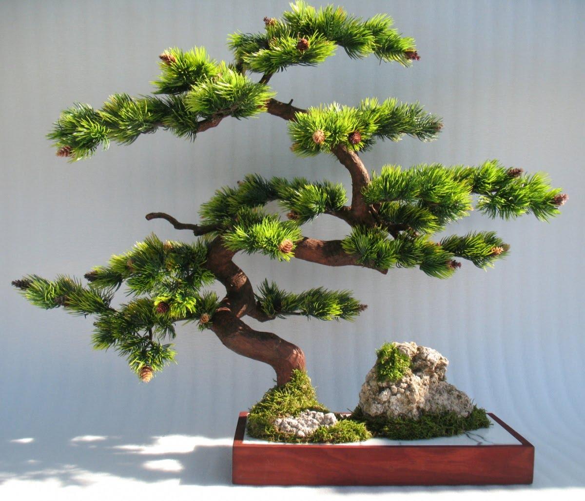 дерево бонсай картинки