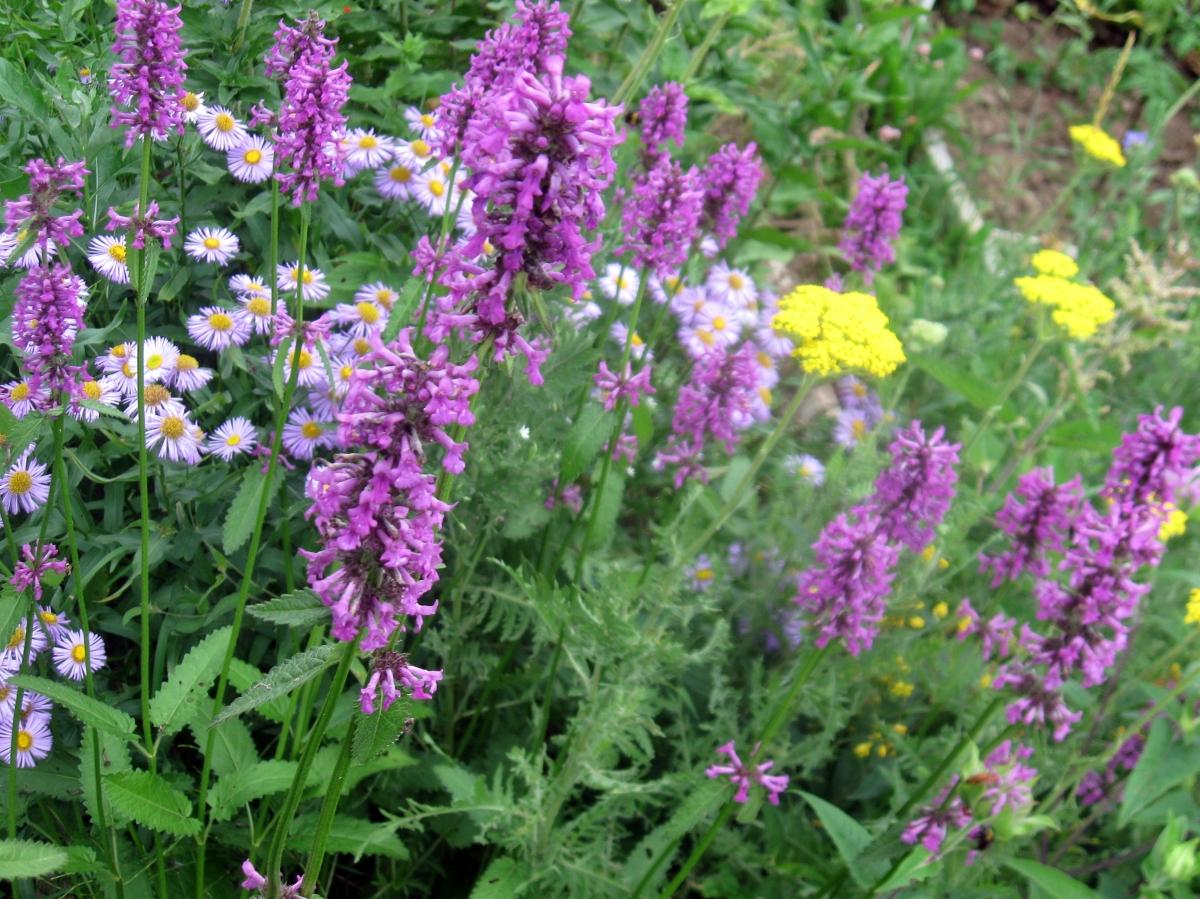 Белые душистые садовые цветы