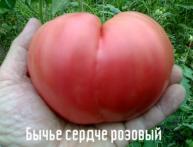 томат Бычье сердце