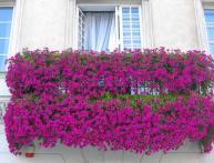 Как посадить петунию на рассаду в домашних условиях