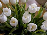 Как правильно хранить тюльпаны