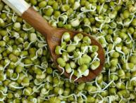 проращиватель семян, отзывы