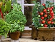 огород на балконе своими руками