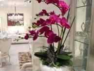 можно ли садить орхидею в непрозрачный горшок