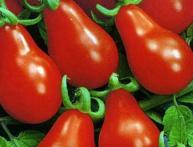 как выглядит томат матрешка