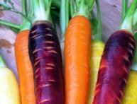 желтая морковь, сорта моркови