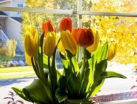как дома посадить тюльпаны