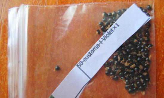 семена эцстомы
