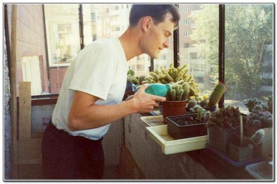 как правильно поливать кактусы