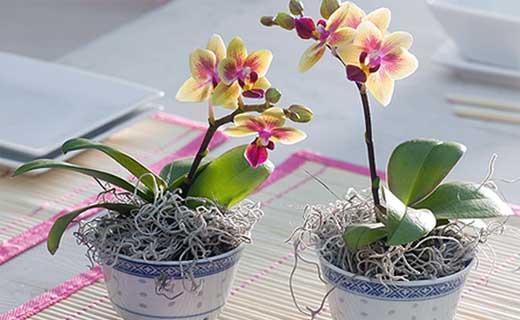 Можно ли поливать орхидею сверху, особенности ухода, полезные советы