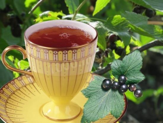 чай из смородиновых листьев польза и вред
