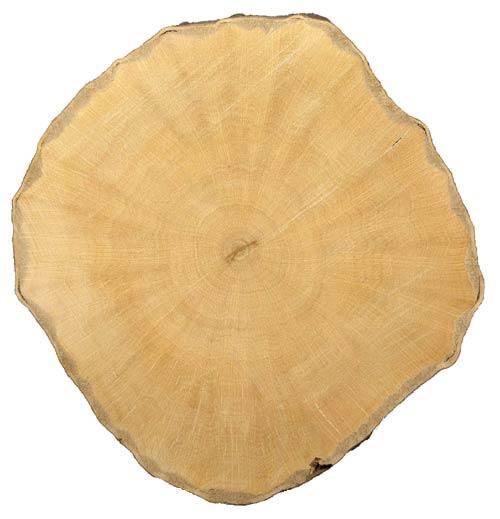 древесина граба