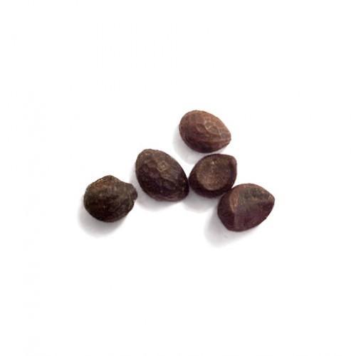 семена клеродендрума купить