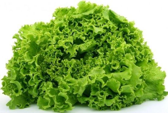 салат латук