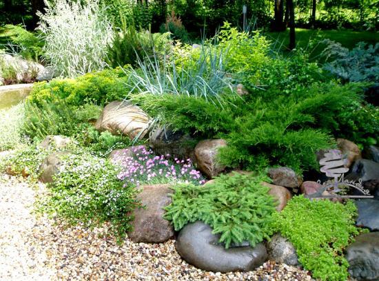 хвойные растения в ландшафтном саду