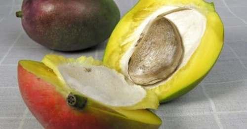 выращивание манго из косточки