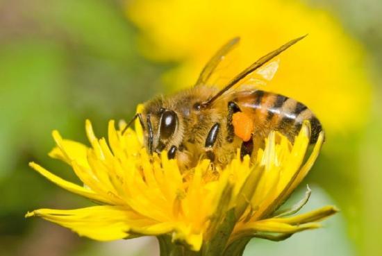 К двудольным растениям относится 200 тысяч видов покрытосеменных