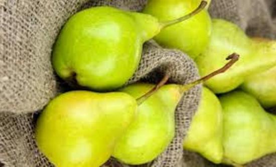 урожайность груши свердловчанка