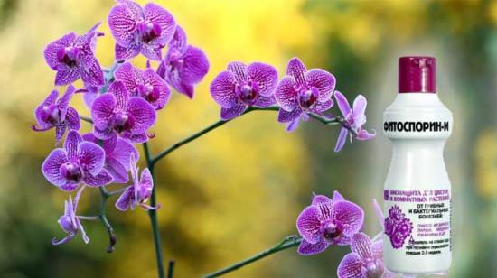 фитоспорин для комнатных растений