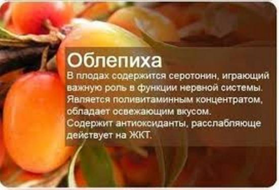 ягоды, содержащие рекордное количество витаминов и микроэлементов
