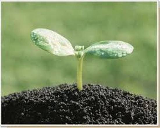 почва для земледелия