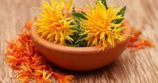 цветки сафлоры