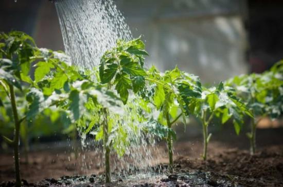 листьевая подкормка растворенными минеральными удобрениями