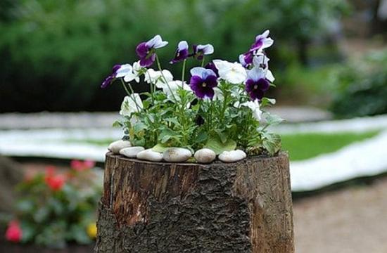 использованиепня для в садовом дизайне