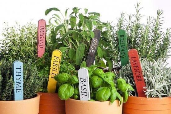 какие травы можно купить в садовом центре